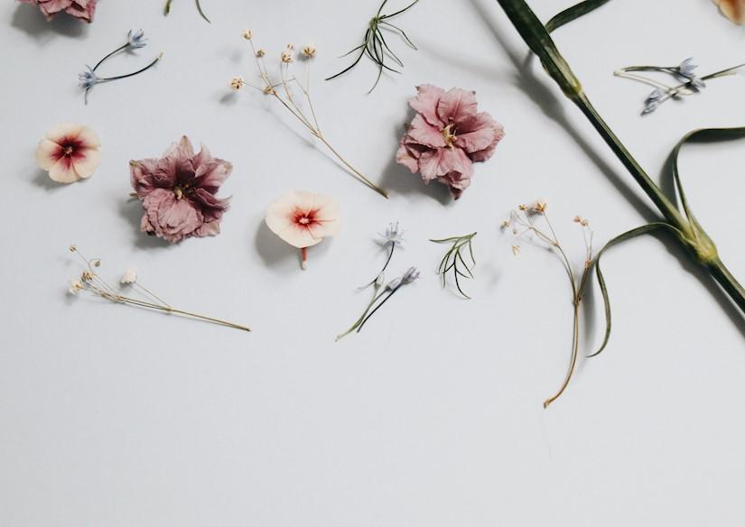 cute minimalist flowers wallpaper